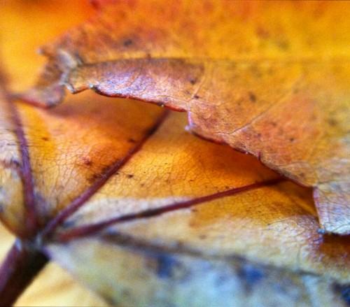 Orange Leaves. Photo ©Kerri Farley