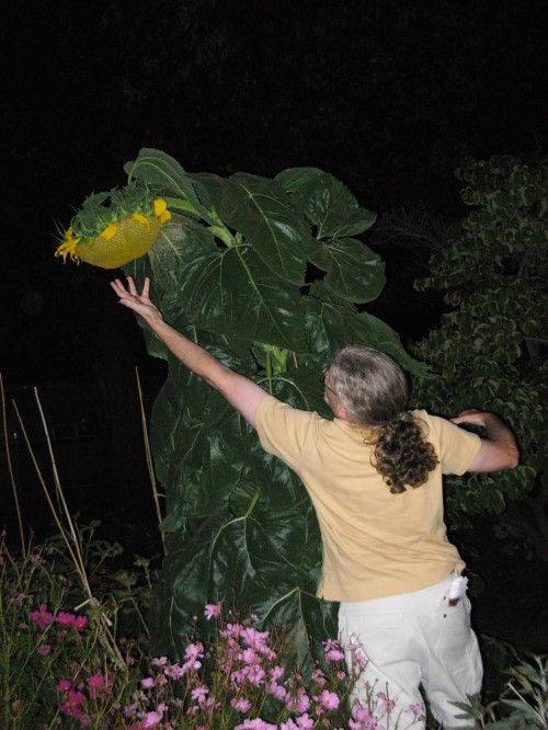 Stratoz and the Giant Sunflower.  Photo by Margaret Almon.