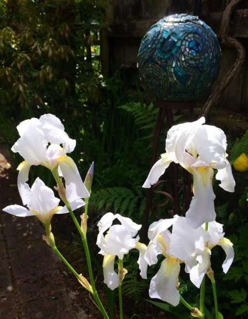 Iris in Suzi's Magical Garden