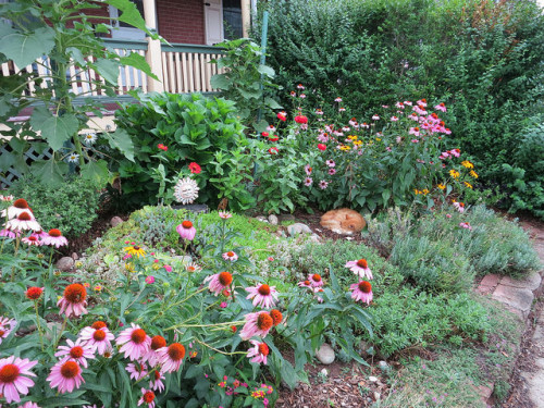 The Garden of Nutmeg Designs with Orange Cat.