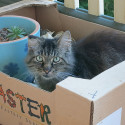 Bobo cat in a box
