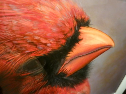 Cardinalis cardinalis. Northern Cardinal (Male) II by Kate Breakey.