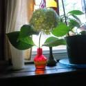 Hydrangea from the Garden of Nutmeg Designs