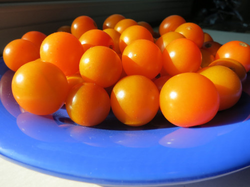 Cherry Tomatoes from the Lansdale Farmers Market. Photo by Wayne Stratz.